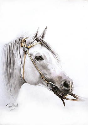 Freed Drawing - Horse Portrait by Tamer and Cindy Elsharouni
