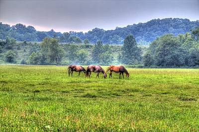 Horses In A Field Art Print by Jonny D