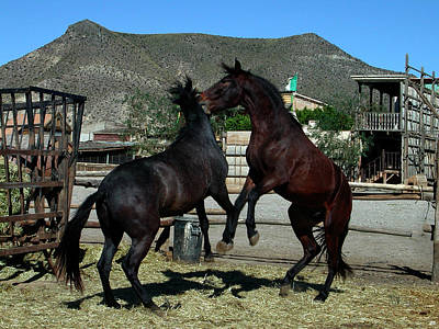 2 Horses In Love Almeria Spain Original by Colette V Hera  Guggenheim