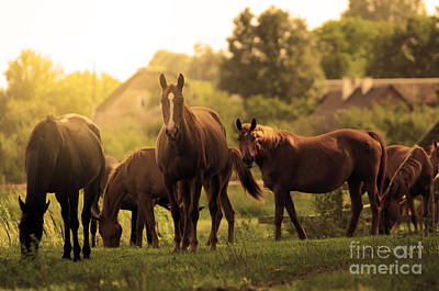 Wildlife Photograph - Horses On The Field by Michal Bednarek
