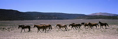 Horses Running In A Field, Colorado, Usa Art Print by Panoramic Images