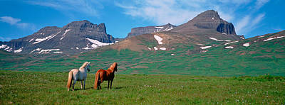 Grazing Snow Photograph - Horses Standing And Grazing In A by Panoramic Images