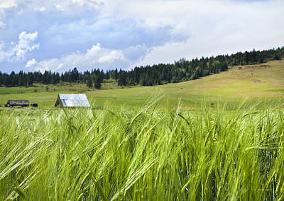 Field Of Crops Photograph - How Green Was My Valley by Theresa Tahara