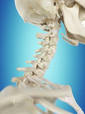 Human Cervical Spine Art Print by Sciepro