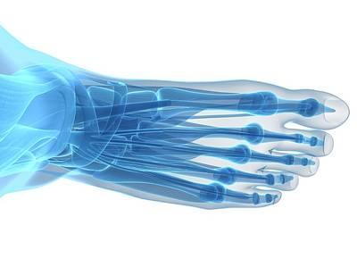 Biomedical Illustration Photograph - Human Foot Bones by Sebastian Kaulitzki