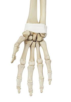 Biomedical Illustration Photograph - Human Hand Anatomy by Sciepro