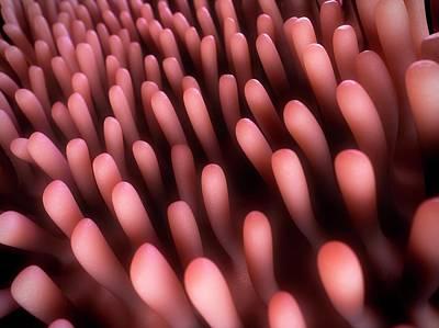 Human Intestinal Lining Art Print