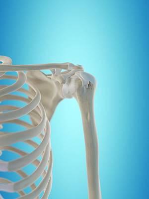Human Shoulder Tendons Art Print by Sciepro