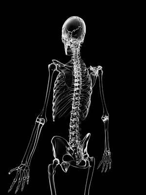 Backbone Photograph - Human Skeleton by Sebastian Kaulitzki