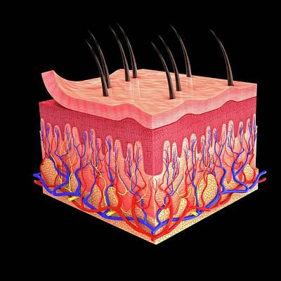Dermatology Photograph - Human Skin by Pixologicstudio