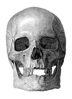 1880s Photograph - Human Skull by British Library