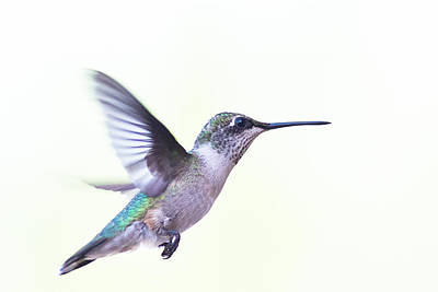 Print featuring the photograph Hummer by Annette Hugen