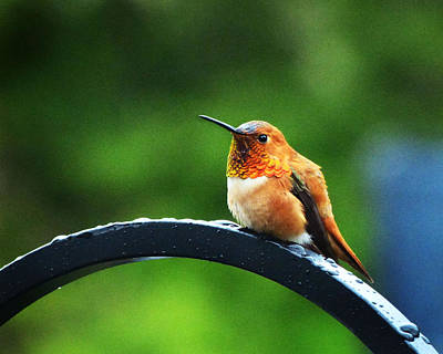 Photograph - Hummingbird by Monique Morin Matson