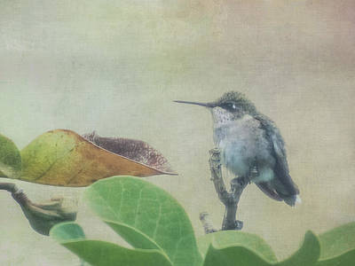 Photograph - Hummingbird IIi by Patti Deters