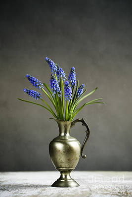 Blue Grapes Photograph - Hyacinth Still Life by Nailia Schwarz