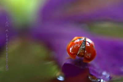 Photograph - I'm A Little Behind by Deb Buchanan