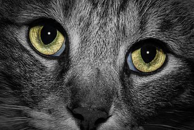 In A Cats Eye Art Print