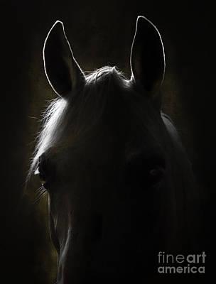 Grey Horse Digital Art - In The Darkness by Angel  Tarantella