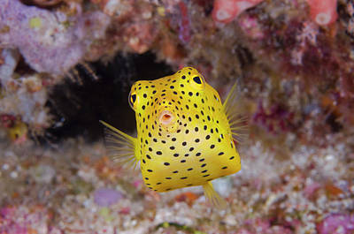 Colorful Tropical Fish Photograph - Indian Ocean, Indonesia, Komodo by Jaynes Gallery