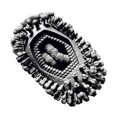 Cut-away Photograph - Influenza Virus by Russell Kightley