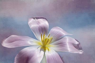 Kim Photograph - Inner Glow by Kim Hojnacki