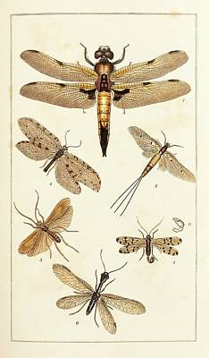 Insects Art Print by King's College London