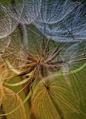 Dandelion Photograph - Inside by Kent Mathiesen