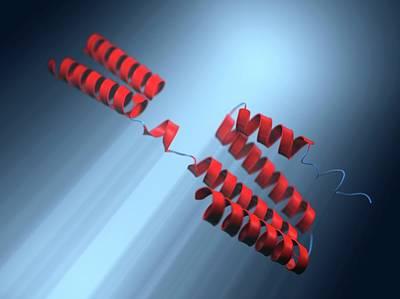 Interleukin-10 Molecular Model Art Print