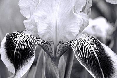 Photograph - Iris 11 by Allen Beatty