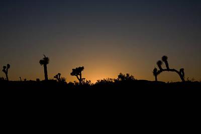 Photograph - Joshua Tree In Silhouette by Susan Leonard