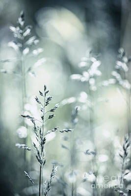 Botanic Photograph - June Grass Flowering by Elena Elisseeva