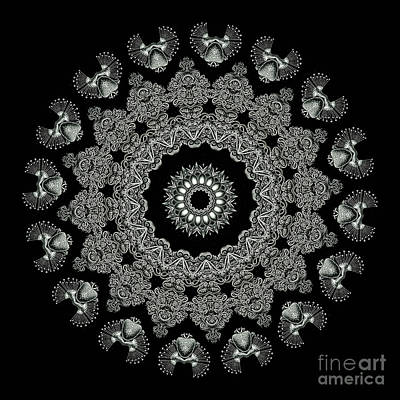 Mandala Photograph - Kaleidoscope Ernst Haeckl Sea Life Series Black And White Set 2 by Amy Cicconi