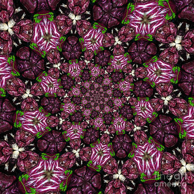 Cabbage Photograph - Kaleidoscope Raddichio Lettuce by Amy Cicconi
