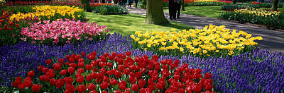 Tulips Photograph - Keukenhof Garden, Lisse, The Netherlands by Panoramic Images