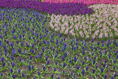 Garden Of Europe Photograph - Keukenhof by Joana Kruse