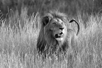 Photograph - King Of The Savanna by Michele Burgess
