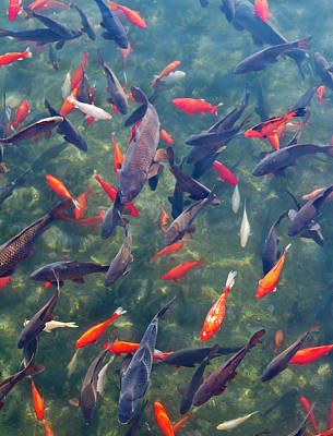 Carp Photograph - Koi And Carp In Big Spring Park by William Sutton