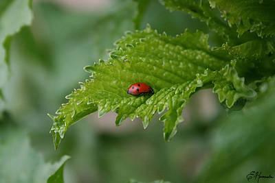 Painting - Ladybug by Ellen Henneke