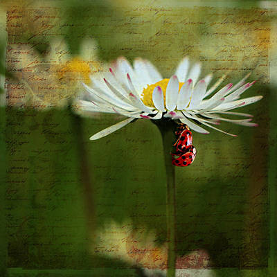 Ladybug Mixed Media - Ladybug In Love by Heike Hultsch