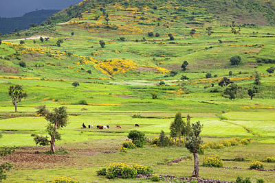 Sorghum Photograph - Landscape Between Gonder And Lake Tana by Martin Zwick