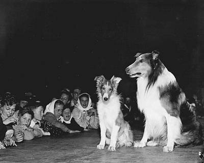 Most Photograph - Lassie by Retro Images Archive