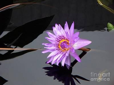 Lavender Lily Art Print