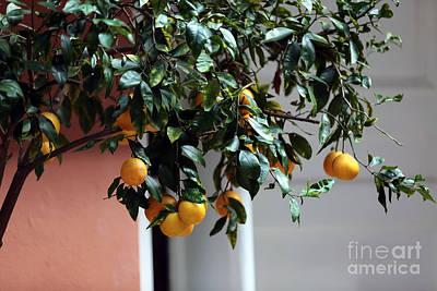 Lemon Tree Art Print by John Rizzuto