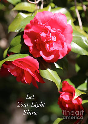 Camellia Photograph - Let Your Light Shine by Carol Groenen