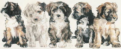Sporting Mixed Media - Lhasa Apso Puppies by Barbara Keith