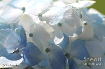 Photograph - Light Blue Hydrangea by J McCombie