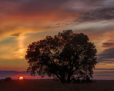 Photograph - Light Pillar And Cottonwood by Rob Graham