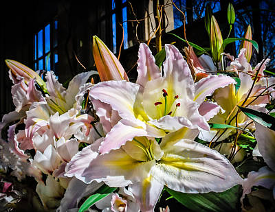 Photograph - Lilies Out Of The Shadows by Len Romanick