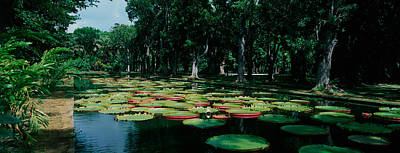 Tree Leaf On Water Photograph - Lily Pads Floating On Water by Panoramic Images