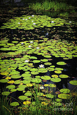 Lilies Royalty-Free and Rights-Managed Images - Lily pads on dark water by Elena Elisseeva